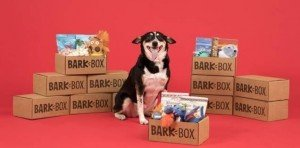 Bark Box Subscription - Best Gifts for Dogs for the Holidays - Seattle Dog Zone