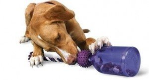 PetSafe Busy Buddy Tug-a-Jug Meal - Best Gifts for Dogs for the Holidays - Seattle Dog Zone