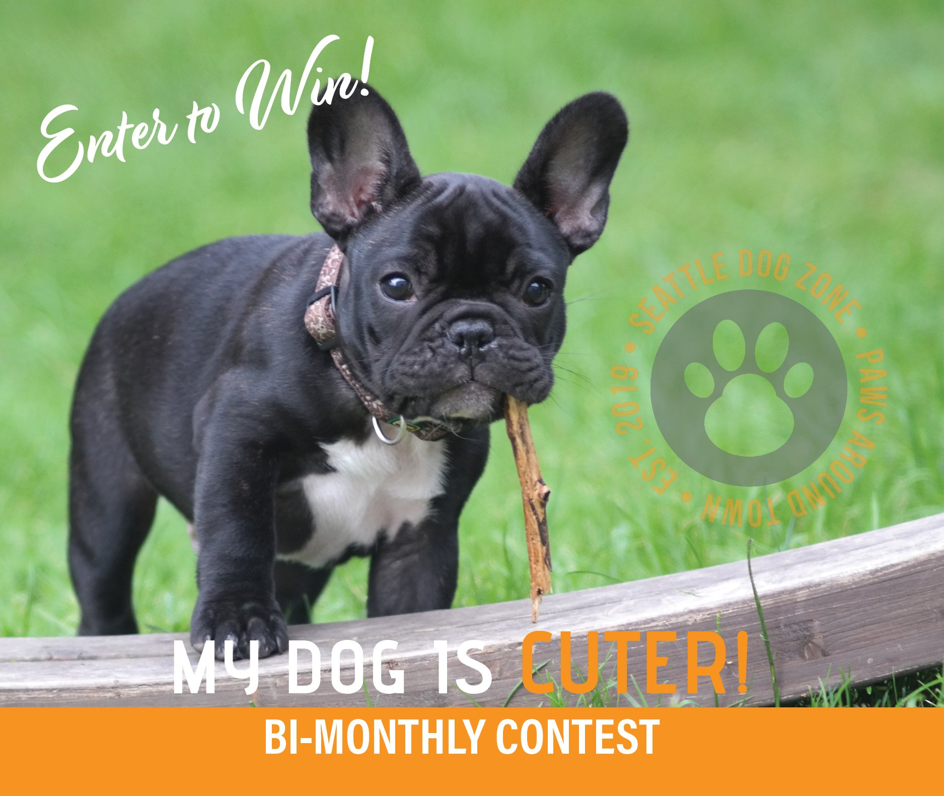Enter to Win the My Dog is Cuter Bi-Monthly Contest